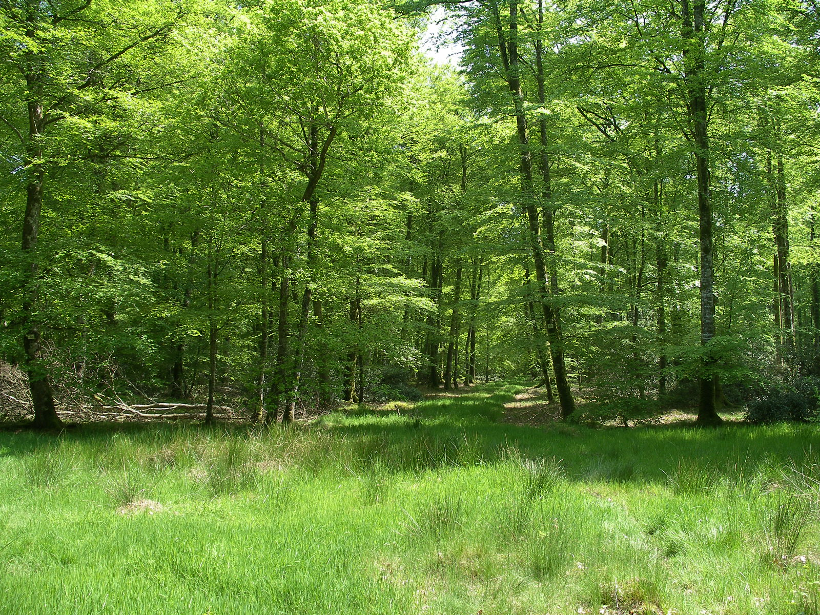 Quels sont les outils indispensables à un forestier ?